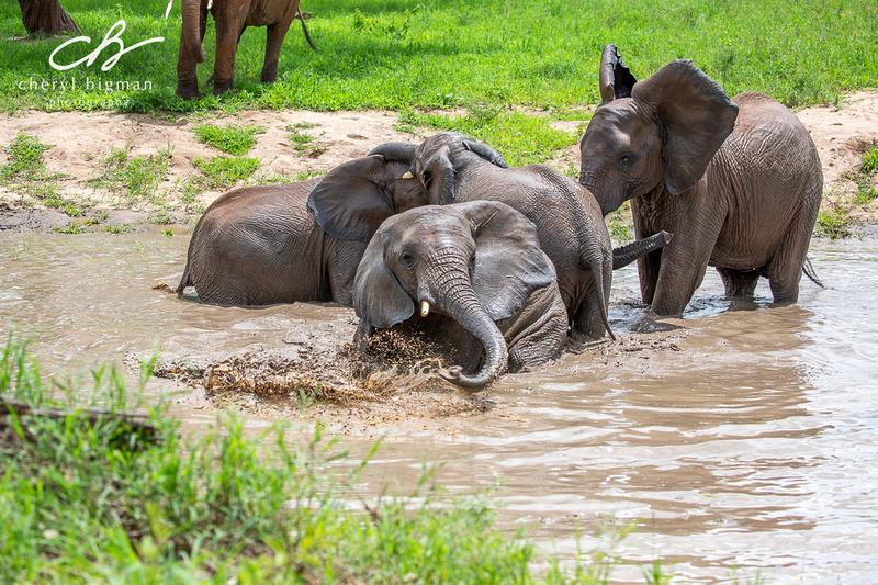 Elephant-Swimming-Hole-Tanzania-1